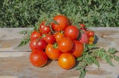 Tomates fraîches sur le fond en bois Image libre de droits