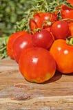 Tomates fraîches sur le fond en bois rustique Photographie stock libre de droits