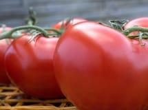 Tomates fraîches sur un tapis de paille Image libre de droits