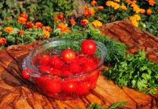 Tomates fraîches tombant dans l'eau pure Images libres de droits