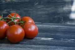Tomates fra?ches sur un branchement images stock