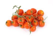 Tomates fraîches de vigne Photographie stock libre de droits