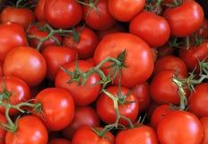 Tomates fraîches à un marché d'agriculteurs dans les Frances Photographie stock libre de droits