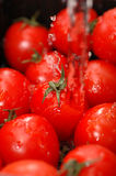 Tomates frescos fotos de stock royalty free
