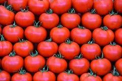 Tomates frescos Fotos de Stock