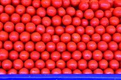 Tomates frescos Imagem de Stock