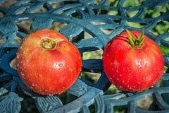Tomates frescos Foto de archivo libre de regalías