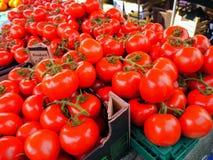 Tomates frescos Imagen de archivo