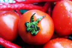 Tomates frescos com gotas de água Fotos de Stock Royalty Free