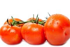 Tomates frescos con gotas del rocío Foto de archivo libre de regalías