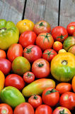 Tomates frescos da exploração agrícola do grau diferente da maturidade fotografia de stock