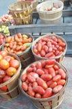 Tomates frescos de Roma de la granja en Nueva York Fotografía de archivo