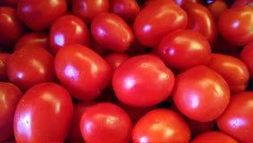 Tomates frescos do jardim Imagens de Stock