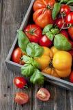 Tomates frescos en caja de madera Imagen de archivo libre de regalías