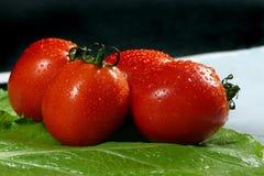 Tomates frescos en el fondo verde de la colza Fotos de archivo libres de regalías