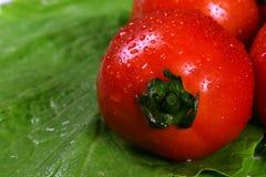 Tomates frescos en el fondo verde de la colza Fotografía de archivo