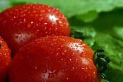 Tomates frescos en el fondo verde de la colza Fotos de archivo