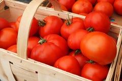 Tomates frescos en la cesta Fotografía de archivo libre de regalías