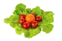 Tomates frescos en las hojas de la ensalada verde aisladas en un blanco Imagen de archivo
