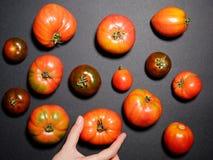 Tomates frescos en un fondo gris Visión superior Fotos de archivo