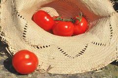 Tomates frescos en un sombrero Imagen de archivo libre de regalías