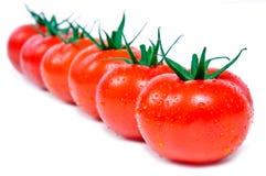 Tomates frescos en una fila Foto de archivo libre de regalías