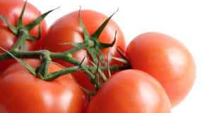 Tomates frescos en vid Imágenes de archivo libres de regalías