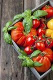 Tomates frescos na caixa de madeira Foto de Stock