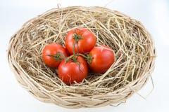Tomates frescos na palha Fotografia de Stock Royalty Free