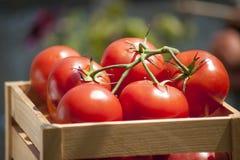 Tomates frescos na videira em uma caixa de madeira Fotos de Stock