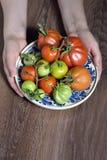 Tomates frescos nas mãos Fotos de Stock