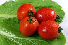 Tomates frescos no fundo verde da couve-nabiça Fotografia de Stock