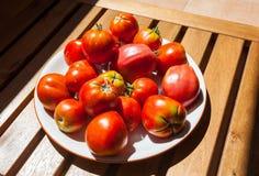 Tomates frescos no sol, Espanha Imagem de Stock