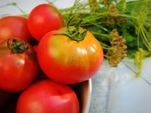 Tomates frescos orgânicos do jardim home em uma bacia Ervas e armorácio Fotografia de Stock