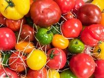 Tomates frescos para la venta en el mercado de los granjeros imágenes de archivo libres de regalías