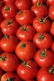 Tomates frescos para a venda em um mercado Fotos de Stock Royalty Free