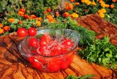 Tomates frescos que caem na água pura Foto de Stock
