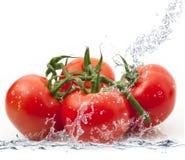 Tomates frescos que caen en agua Imagen de archivo