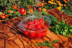 Tomates frescos que caen en agua pura Fotografía de archivo