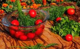 Tomates frescos que caen en agua pura Foto de archivo