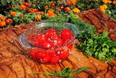 Tomates frescos que caen en agua pura Imágenes de archivo libres de regalías