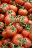 Tomates frescos, vermelhos, maduros, alguns ainda unidos à videira, para imagens de stock