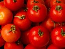 Tomates frescos y sanos Imagenes de archivo