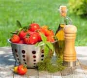 Tomates, garrafa de azeite, abanador da pimenta e ervas maduros frescos Fotografia de Stock