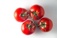 Tomates grandes rojos en una rama en un fondo blanco Fotos de archivo libres de regalías