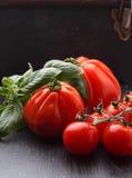 Tomates grandes y pequeños con albahaca Fotos de archivo libres de regalías