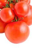 Tomates grandes y pequeños en la ramificación aislada Fotos de archivo