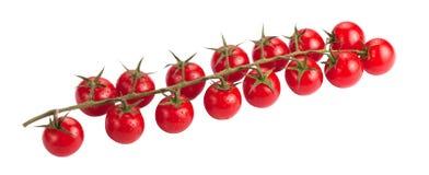 Tomates herry de ¡ de Ð sur la branche photos libres de droits