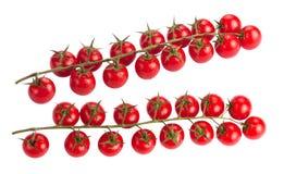 Tomates herry de ¡ de Ð sur la branche image stock