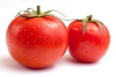 Tomates humides Photos libres de droits